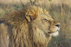 Hier Ihre Serengeti Park-Freikarte ausdrucken und 32,50 EUR sparen. Erleben Sie auf Ihrer Safari Löwen, Zebras, Affen und andere Tiere in freier Wildbahn.