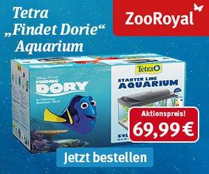 Auch 2016 warten beim ZooRoyal Adventskalender-Gewinnspiel 24 Preise auf alle Tierfreunde: Freuen Sie sich auf ZooRoyal-Gutscheine im Wert von 50 Euro.
