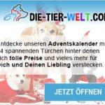 die-tier-welt.com Adventskalender-Gewinnspiel