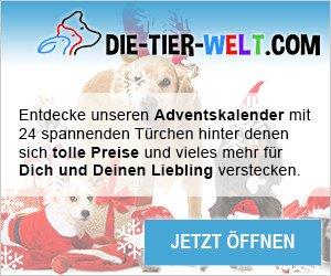 Beim die-tier-welt.com Adventskalender-Gewinnspiel können Tierfreundinnnen und Tierfreunde mit ein wenig Glück täglich tolle Gewinne abstauben.