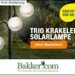 Jetzt Blumen pflanzen mit Bakker + KOSTENLOSE Gartenschere / Solarlampe GESCHENKT