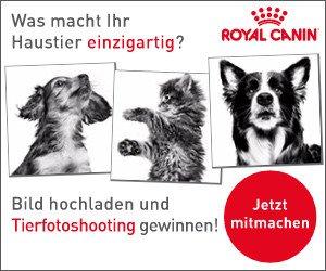Beim aktuellen Royal Canin Gewinnspiel können Sie ein Fotoshooting für Ihren Vierbeiner oder 1 von 3 Jahresvorräten Tierfutter gewinnen!