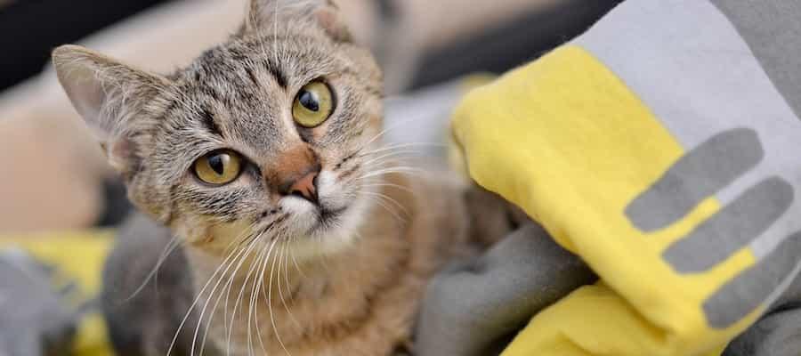 Beim Kauf von Biokat's Classic 3 in1 Produkten im Fressnapf Online-Shop haben Sie jetzt die Chance, einen Jahresvorrat Katzenstreu von Biokat's zu gewinnen.