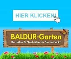 Gewinnen Sie jetzt 10 BALDUR-Garten Geschenk-Gutscheine sowie viele weitere Preise rund um das Thema Garten. Viel Erfolg bei der Teilnahme!