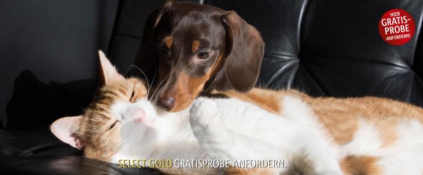 Gratis Probe von Select Gold, Hund und Katze