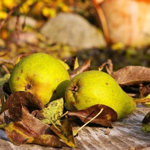 Birnen im Herbst