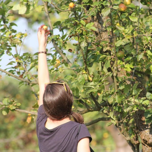 mundraub: Frau erntet Apfel