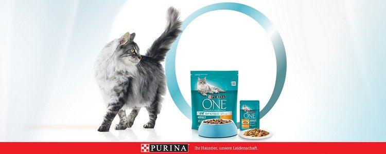 Purina Katze