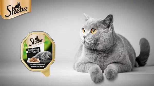 Sheba Katzenfutter
