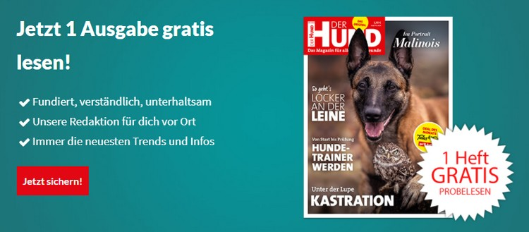 der Hund 1x gratis